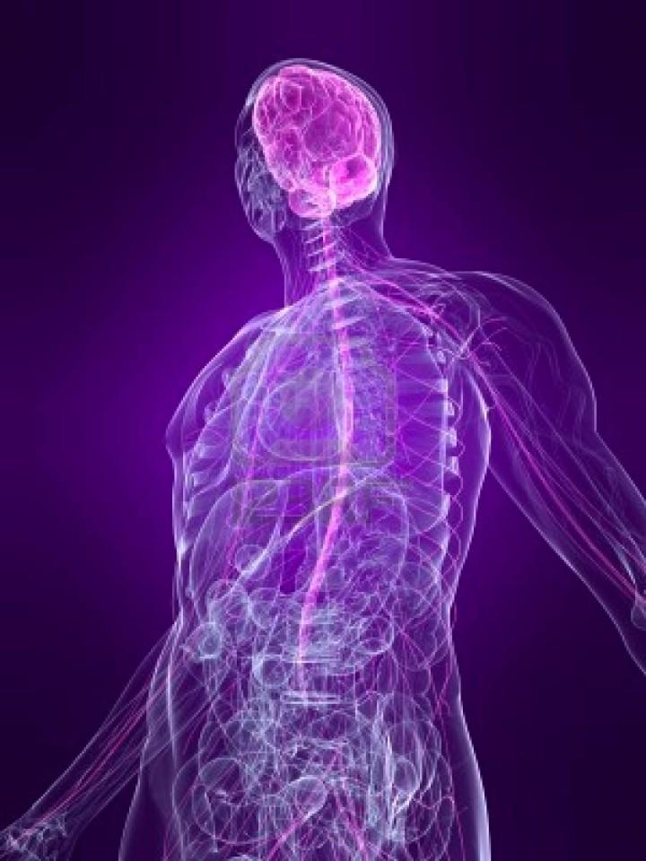 Sistema nervioso autónomo y respiración